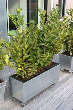 Modern, Plants, Trendy Tree, Plant, Planets