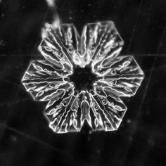 (97) Real Snowflake Photography by Karla Jean Booth