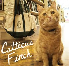 Catticus Finch, mascot of The Next Page bookstore at 722 Chestnut St. in Philadelphia.