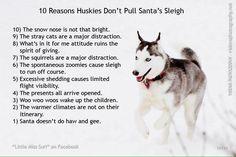 10 Reasons Huskies Don't Pull Santa's Sleigh - Funny Husky Meme - Funny Husky Quote - 10 Reasons Huskies Don't Pull Santa's Sleigh The post 10 Reasons Huskies Don't Pull Santa's Sleigh appeared first on Gag Dad. Husky Humor, Husky Quotes, Funny Husky Meme, Dog Quotes Funny, Dog Memes, Funny Dogs, Siberian Husky Training, Siberian Husky Puppies, Husky Mix