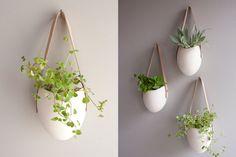 plantes à suspendre