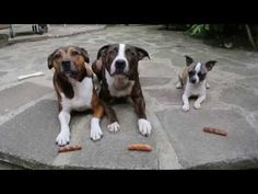 When she gave her 3 dogs a treat, she NEVER expected this. How Sneaky!