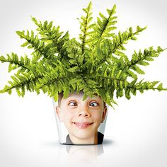 Put your kids silly faces on your flower pots for all to see. Face Planters, Diy Foto, Boston Ferns, Fleurs Diy, Fern Plant, Plant Pots, Hiding Spots, Unique Faces, Terrarium Plants