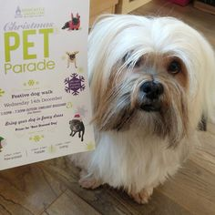 Christmas Pet Parade | Newcastle-under-Lyme | Staffordshire