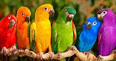 exotic birds of color