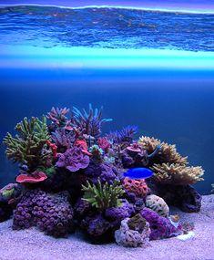 Showus your coral organization skills Marine Aquarium, Reef Aquarium, Saltwater Tank, Saltwater Aquarium, Nano Reef Tank, Reef Tanks, Reef Aquascaping, Beautiful Sea Creatures, Aquarium Design