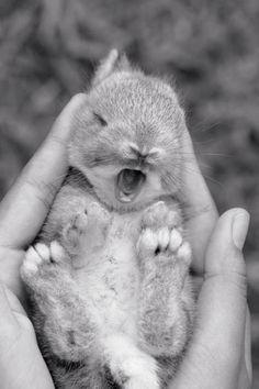 baby rabbit yawning
