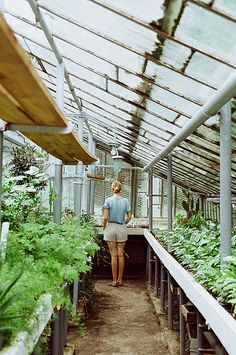 greenhouse inspiration // pathway of green - stefania jane Greenhouse Shed, Greenhouse Gardening, Farm Gardens, Outdoor Gardens, Dream Garden, Home And Garden, Cold Frame, Garden Structures, Pathways