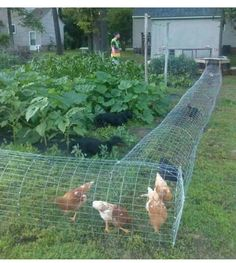 Image result for make a chicken run