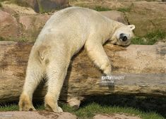 Image result for sleeping bear funny