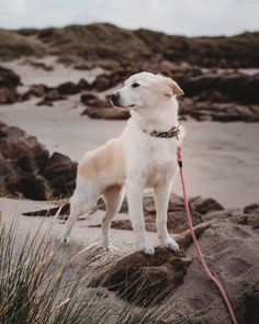 Animals in Charge creates durable, beautiful and Earth friendly goods for your animal