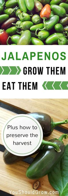 Peppers are a staple in our summer garden. They are really easy to grow and produce like crazy. How to grow peppers and preserve the harvest