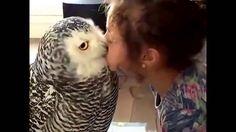 #Сова целует хозяйку! #Owl kisses mistress!