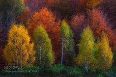 http://www.szabozsoltandras.ro/gallery/