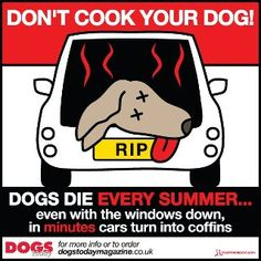 Dog Hot Car Laws + What You Should Do If You See A Dog In A Hot Car
