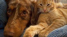 Come gestire il rientro dalla pensione di cani, gatti e altri animali