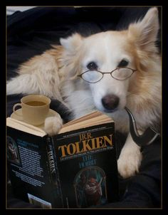 Best books to understand dogs