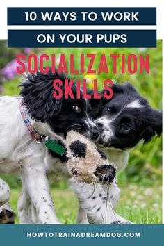 Socialization is not just about letting your pup play with other pups, although that is a great start! Here are 10 ways to work on your pups socialization skills. Puppy Obedience Training, Training Your Puppy, Training Tips, Parkour, Puppy Socialization, Reactive Dog, Cute Dog Photos, Best Puppies, Puppy Play