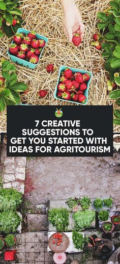 Agritourism is a great way to bring extra money to your farm. You can do so in smaller steps with our creative ideas for agritourism to start with.