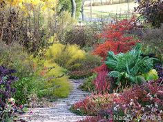 Front path in late October with Amsonia hubrichtii, Persicaria affinis, couve tronchuda, and Acer palmatum; Nancy J. Ondra at Hayefield