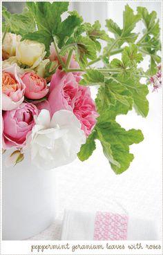 Peppermint Geranium | Flickr - Photo Sharing!