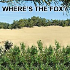 Where is the fox? #3d #stereogram #autostereogram #hidden3d #opticalillusion