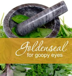 Fighting pink eye or allergies? Goldenseal worked wonders for my children's goopy eyes.