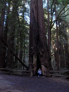 In the heart of a redwood in Muir Woods.