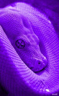 Violet Aesthetic, Dark Purple Aesthetic, Lavender Aesthetic, Neon Aesthetic, Snake Wallpaper, Purple Wallpaper Iphone, Neon Wallpaper, Aesthetic Pastel Wallpaper, Dark Purple Wallpaper