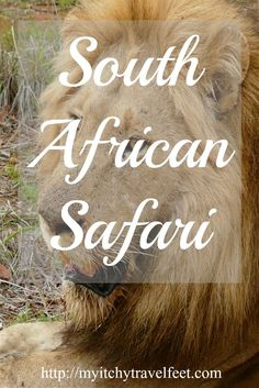 Advice, lodging recommendations and travel inspiration for planning your South African Safari! It's the adventure of a lifetime. Read our tips then add this travel experience to your bucket list.