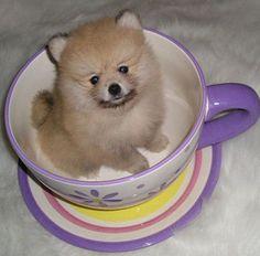 Boxer Puppies For Sale Daytona Beach