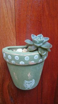 Suculenta no vaso de corujinha!