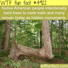 """Native American Tree bending - Now """"Hidden Monuments!""""  ~WTF! weird and fun facts"""