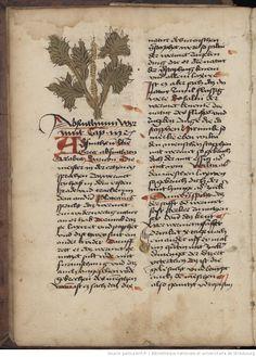 Hortus Sanitatis, manuscrit allemand ed. 1489 : Absinthe... via Gallica (BNF)