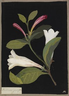 mary-delany-floral-collage  botanical illustration