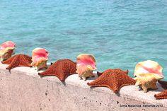 conchas bahamenhas em Nassau