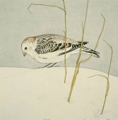 "americanart: ""Snow Bunting - Charles Emile Heil (US, 1870 - "" Illustrations, Illustration Art, Kitty Crowther, John James Audubon, Rare Birds, Bird Design, Gravure, Map Art, Bird Art"