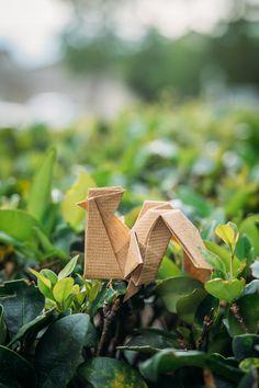 Free range origami rooster. Design by Gen Hagiwara. Sony A7II with Voigtlander Nokton 50mm f/1.5. #visibleinlight