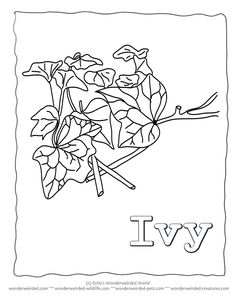 Leaf Coloring Page Ivy Our Pages Of Leaves Black And White Template Drawings Outlines To Color Some Zentangle