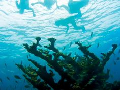 The Florida Keys National Marine Sanctuary is home to some of the world's best diving and snorkeling.