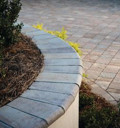 Marina Coping is flowing option that serves as a stunning paver pool coping, but also works elegantly for steps, walls, and other edges. Pool Coping, Legacy Collection, Wall Seating, Design Basics, Sun Room, Free Food, Outdoor Living, Sidewalk, Gardening