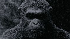 """Andy Serkis """"deserves an Academy Award,"""" declared Matt Reeves tonight at a special War for the Planet of the Apes presentation at New York Comic-Con. """"He's an incredible, incredible actor,"""" added t… New Movies, Movies To Watch, Movies Online, Movies And Tv Shows, Movies Free, Film 2017, New Trailers, Movie Trailers, Maze Runner"""