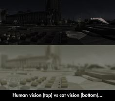 Differences Between Human And Cat Vision - Cats are able to see in near pitch darkness.  Their hearing is better than dogs too.  Amazing.