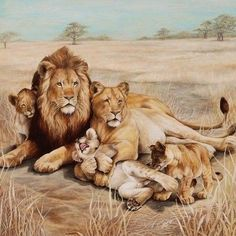 Original Ron Rophar Oil Painting of a Lion Pride Signed -Make Offer- - Original Oil Painting American artist Ron Rophar Alltribes Mesa Chandler Phoenix Scottsdale Arizona - Animal Paintings, Animal Drawings, Beautiful Cats, Animals Beautiful, Le Roi Lion Film, Animals And Pets, Cute Animals, Lion Family, Lion Poster