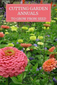 Growing Flowers, Cut Flowers, Growing Zinnias From Seed, Planting Flowers From Seeds, Easiest Flowers To Grow, Cut Flower Garden, Flowers For Cutting Garden, Cut Garden, Flower Farmer