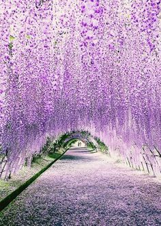 "coiour-my-world: ""Wisteria Tunnel at Kawachi Fuji Gardens. Photography by "" flowers japan Finding Neverland"