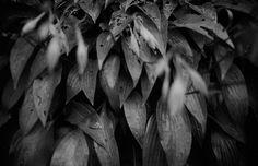 #analog #analogfilm #analogcamera #analogvibes #analogphotography #analogphoto #film #filmcommunity #filmphotography #filmsociety #filmshooter #nature #naturephotography #nature_photo #photo Film Photography, Nature Photography, Nature Photos, Seal, My Arts, Instagram, Nature Pictures, Wildlife Photography, Cinematic Photography
