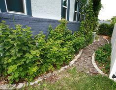 DIY Tutorial: Recycled Wood Slice Garden Pathway   Celebration Generation: Food, Life, Kitties!