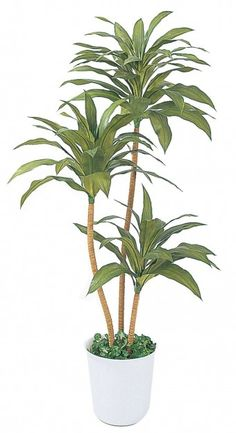 観葉植物|エクステリア・庭・ガーデニング|株式会社タカショー