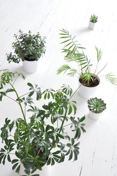 Using similarly colored pots for a grouping of plants shifts the focus to the greenery and makes the whole collection cohesive. Bring it all together with @airwickus Life Scents.